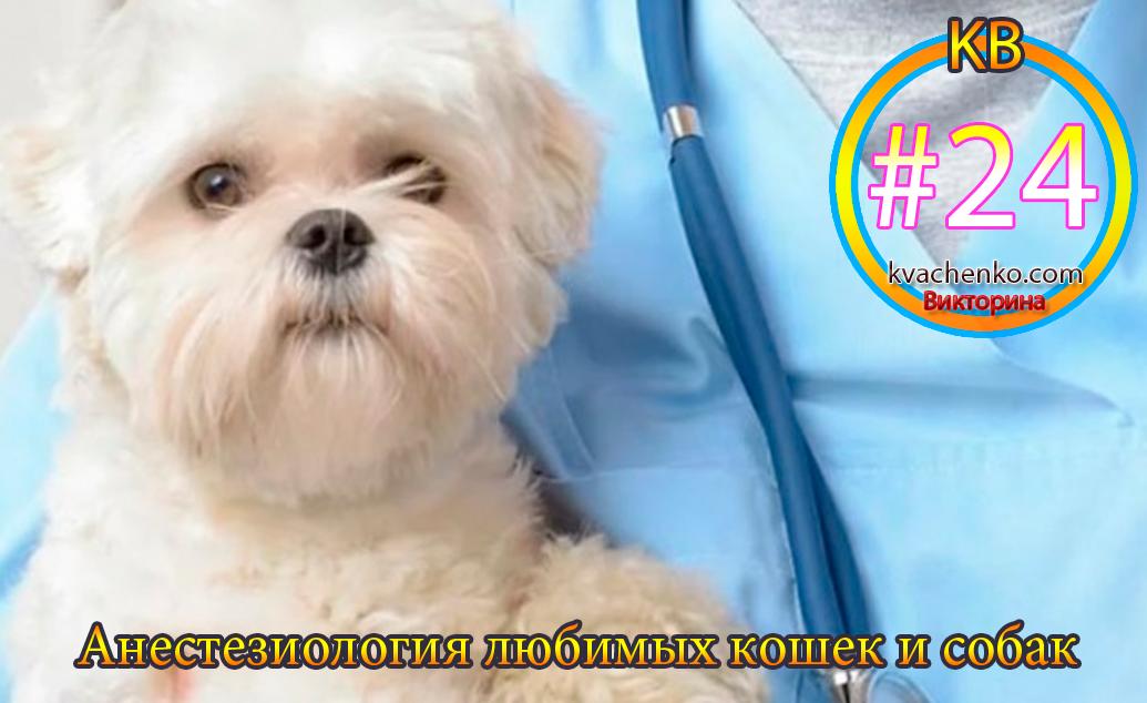 Анестезиология любимых кошек и собак