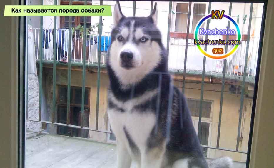 Порода собаки как называется?